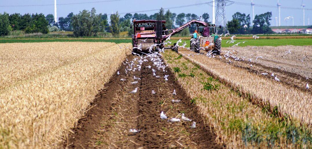 agrarische sector