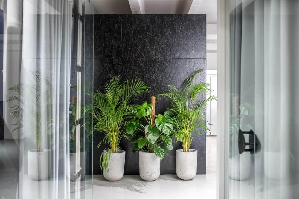 Grote kamerplanten in een kantoor
